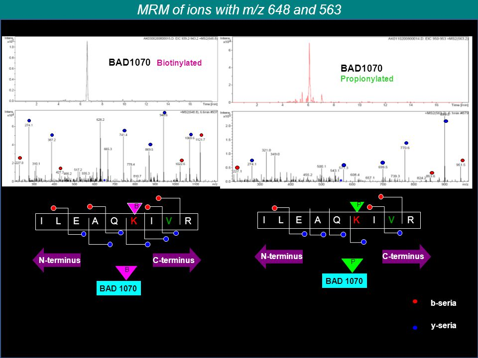 MRM of ions with m/z 648 and 563 BAD1070 Biotinylated BAD1070