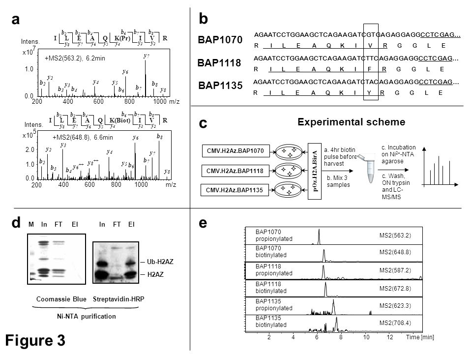 a b c d e Figure 3 BAP1070 BAP1118 BAP1135 Experimental scheme