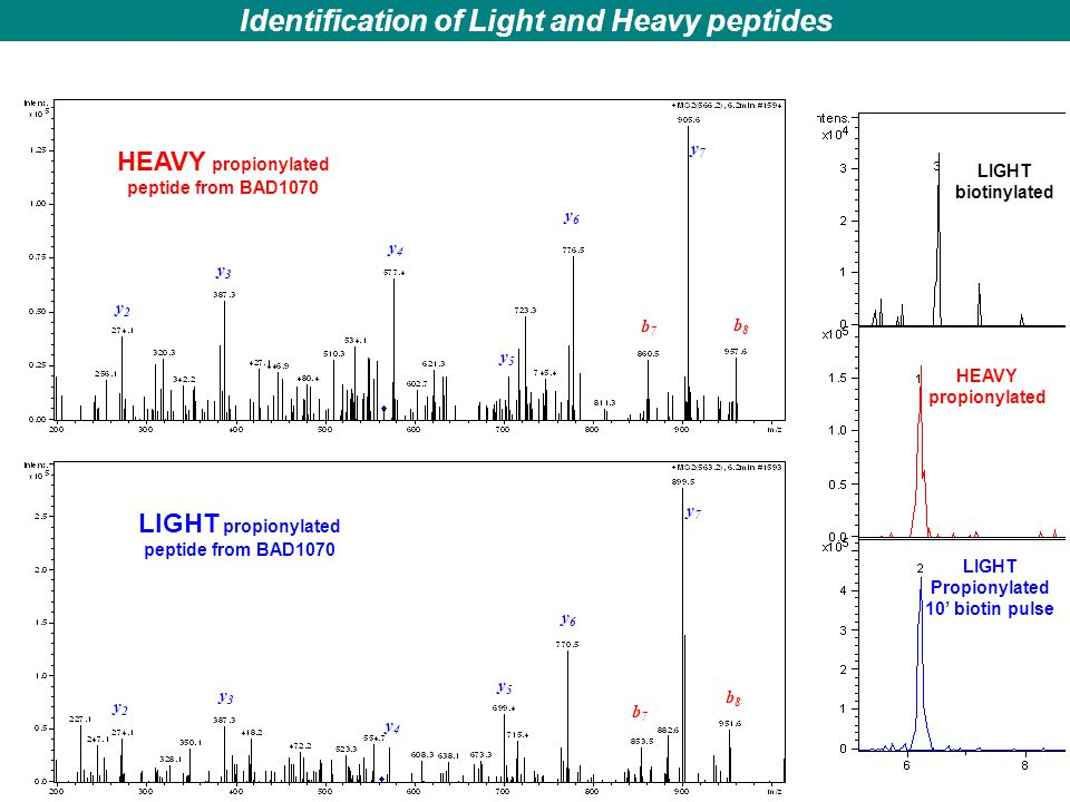 Identification of Light and Heavy peptides