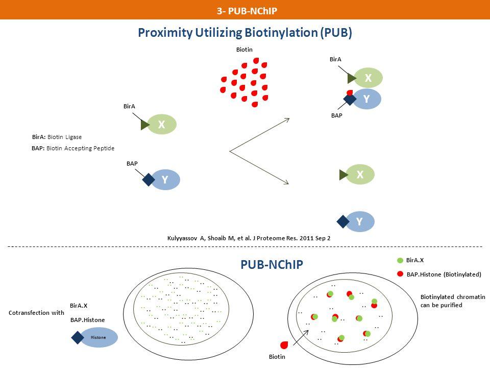 Proximity Utilizing Biotinylation (PUB)