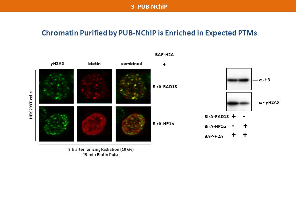 Chromatin Purified by PUB-NChIP is Enriched in Expected PTMs