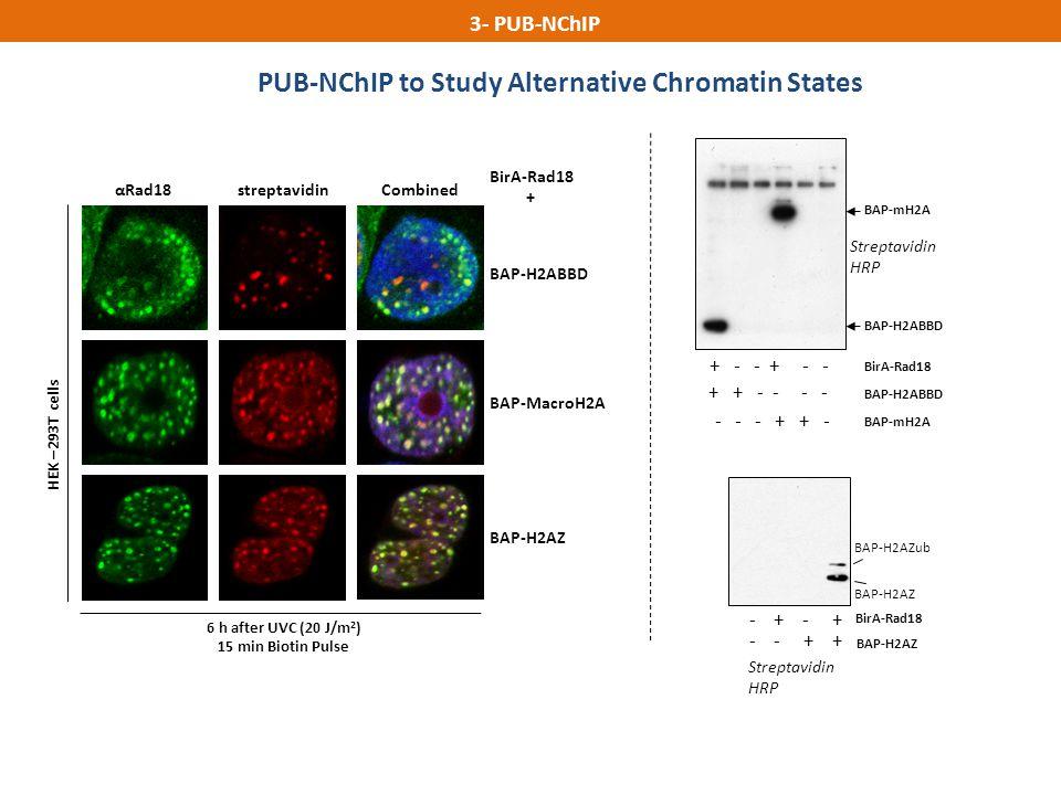 PUB-NChIP to Study Alternative Chromatin States