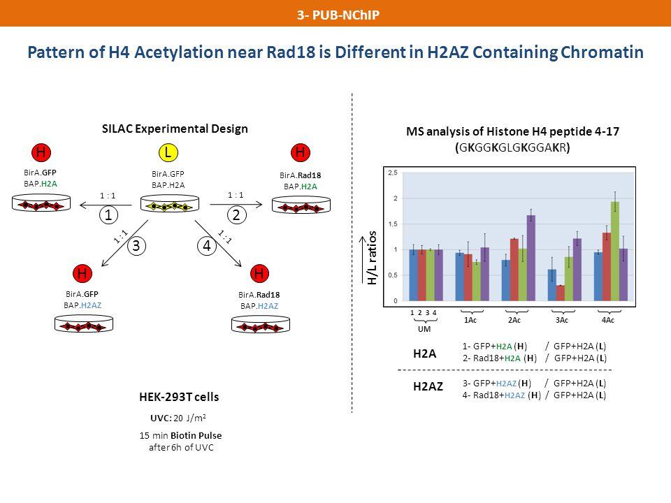 MS analysis of Histone H4 peptide 4-17 (GKGGKGLGKGGAKR)