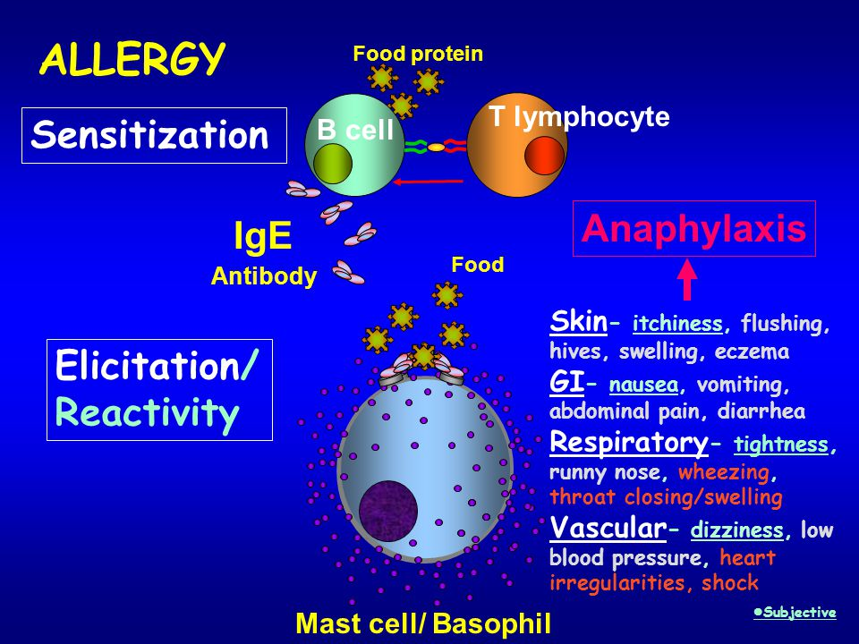 ALLERGY Sensitization Anaphylaxis IgE Elicitation/ Reactivity B cell