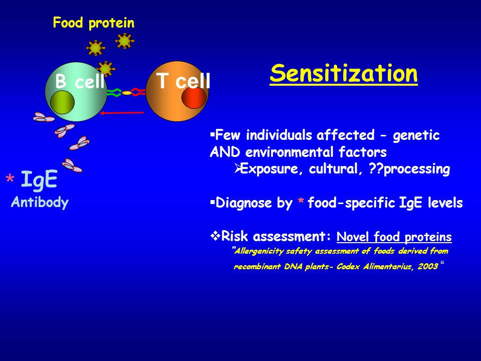 * Sensitization T cell IgE B cell Food protein
