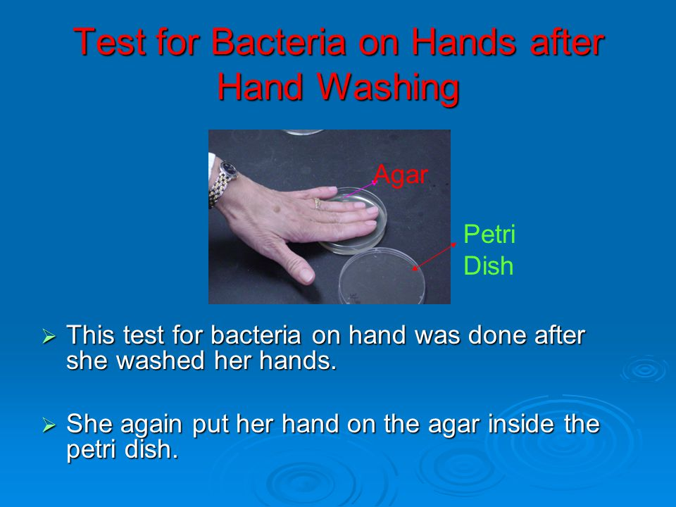 Test for Bacteria on Hands after Hand Washing