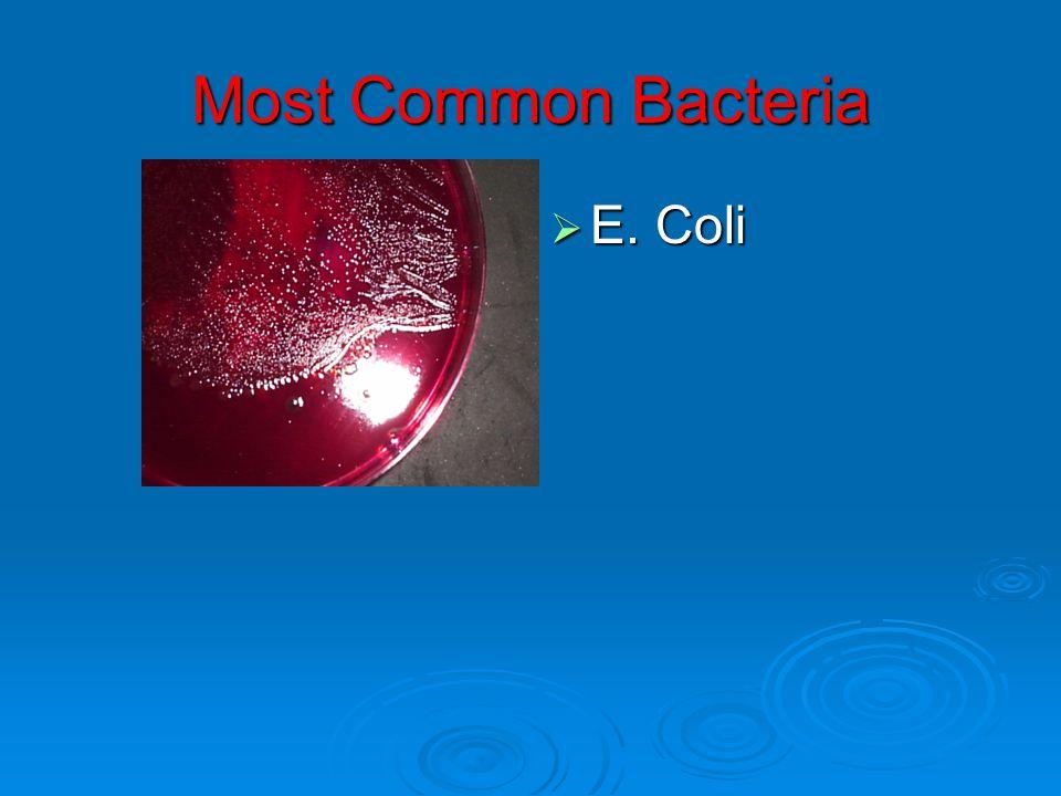 Most Common Bacteria E. Coli