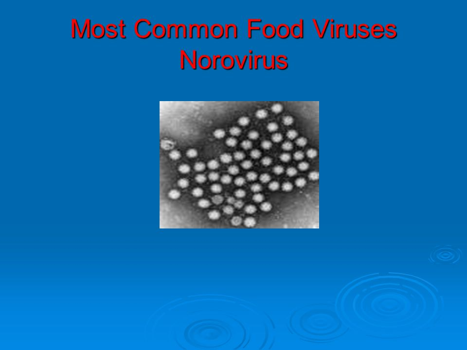 Most Common Food Viruses Norovirus