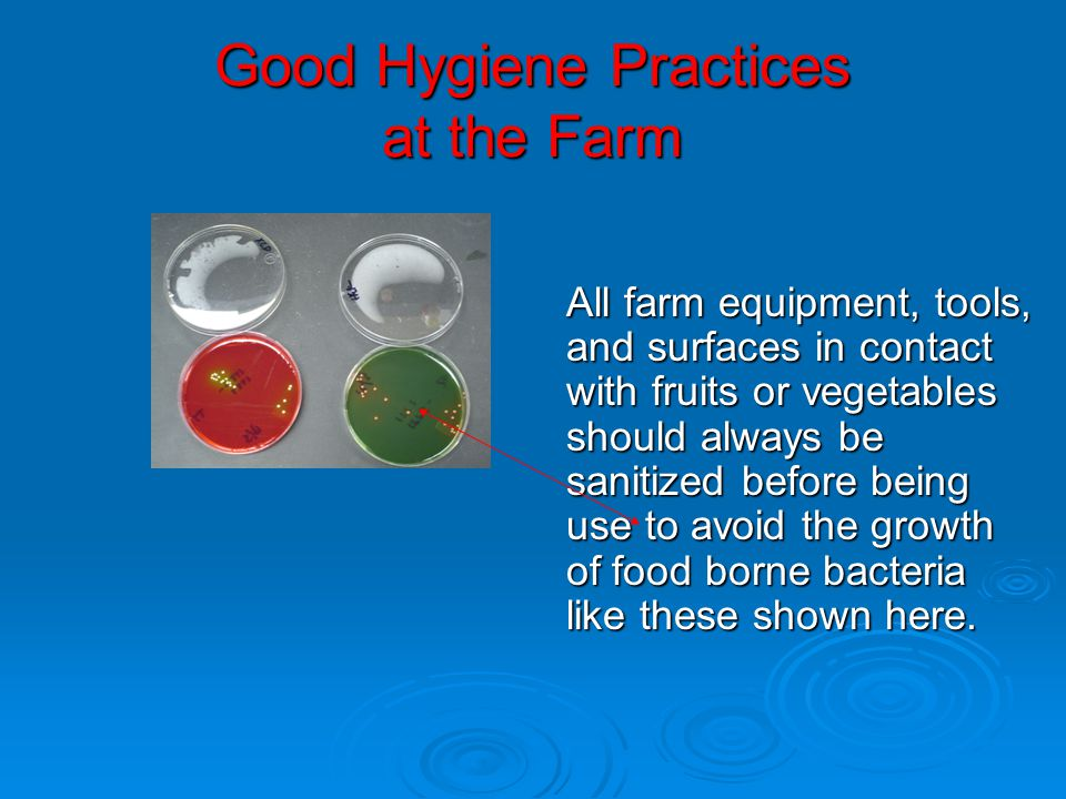 Good Hygiene Practices at the Farm