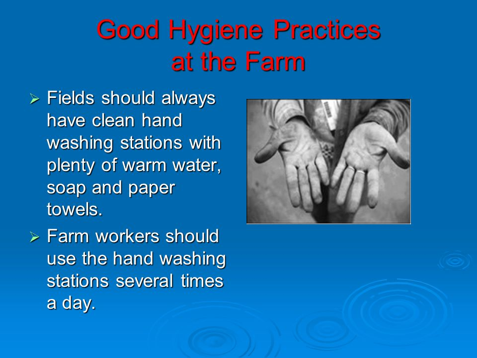thesis about hygiene practices The purpose of this study was to determine the practice of hand hygiene and the application of 5 moments hand hygiene among health care workers in.