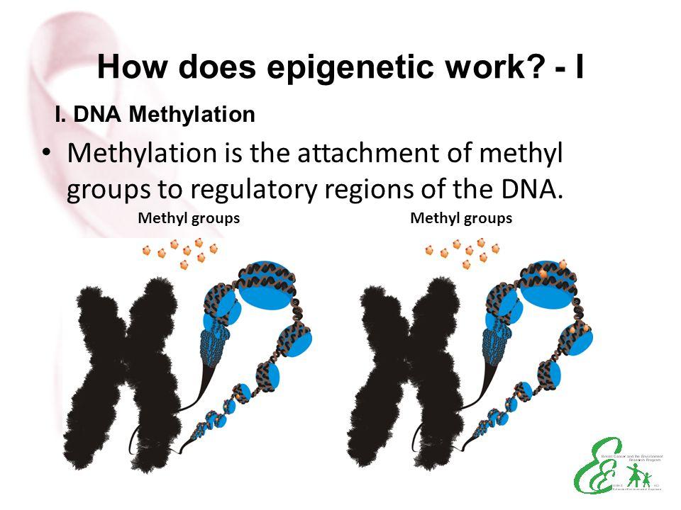 How does epigenetic work - I