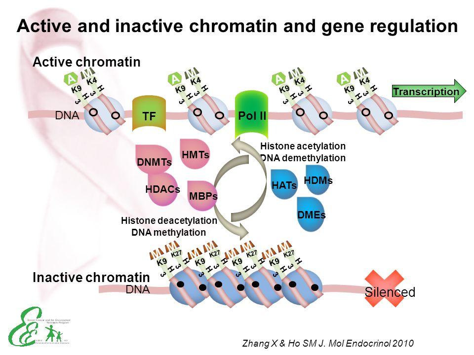 Histone deacetylation