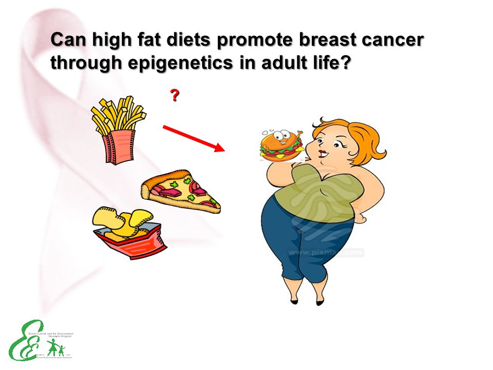 Can high fat diets promote breast cancer through epigenetics in adult life