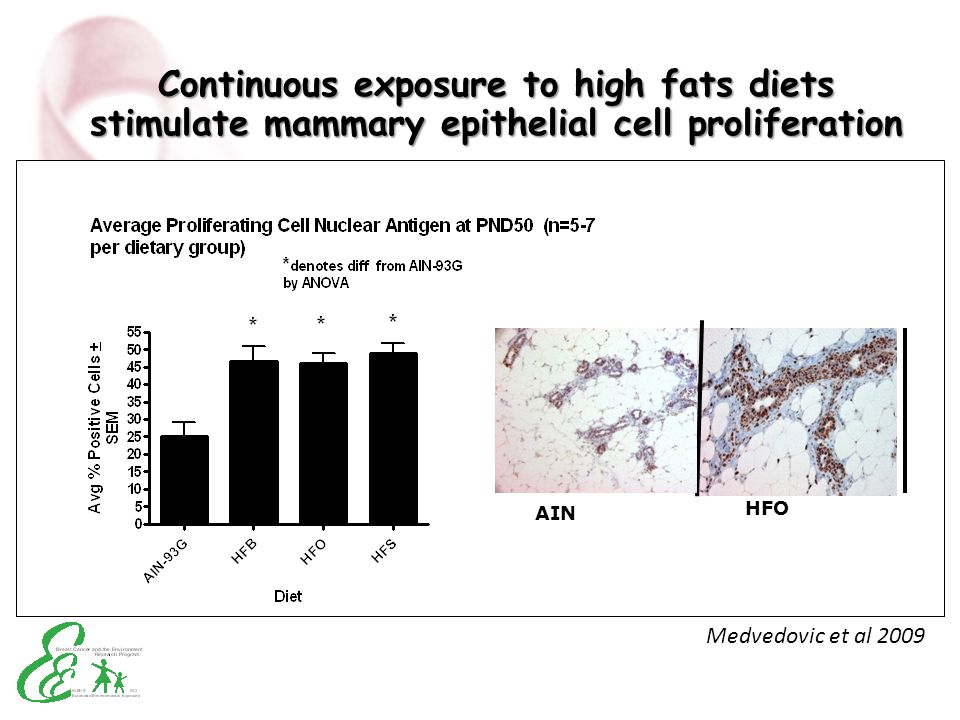 Continuous exposure to high fats diets stimulate mammary epithelial cell proliferation
