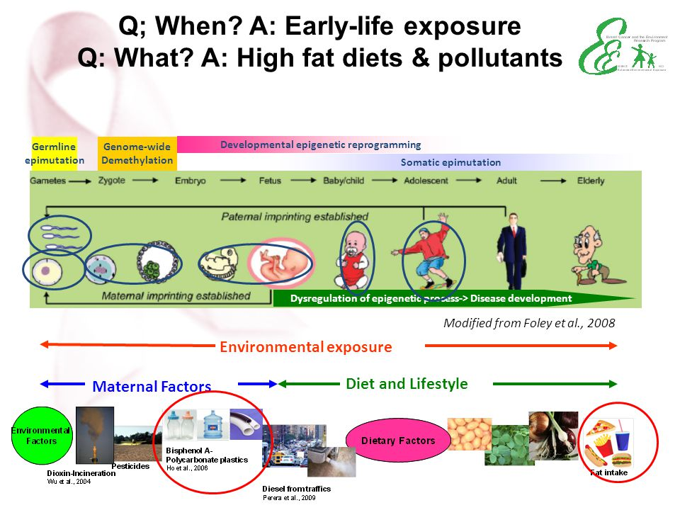 Q; When A: Early-life exposure