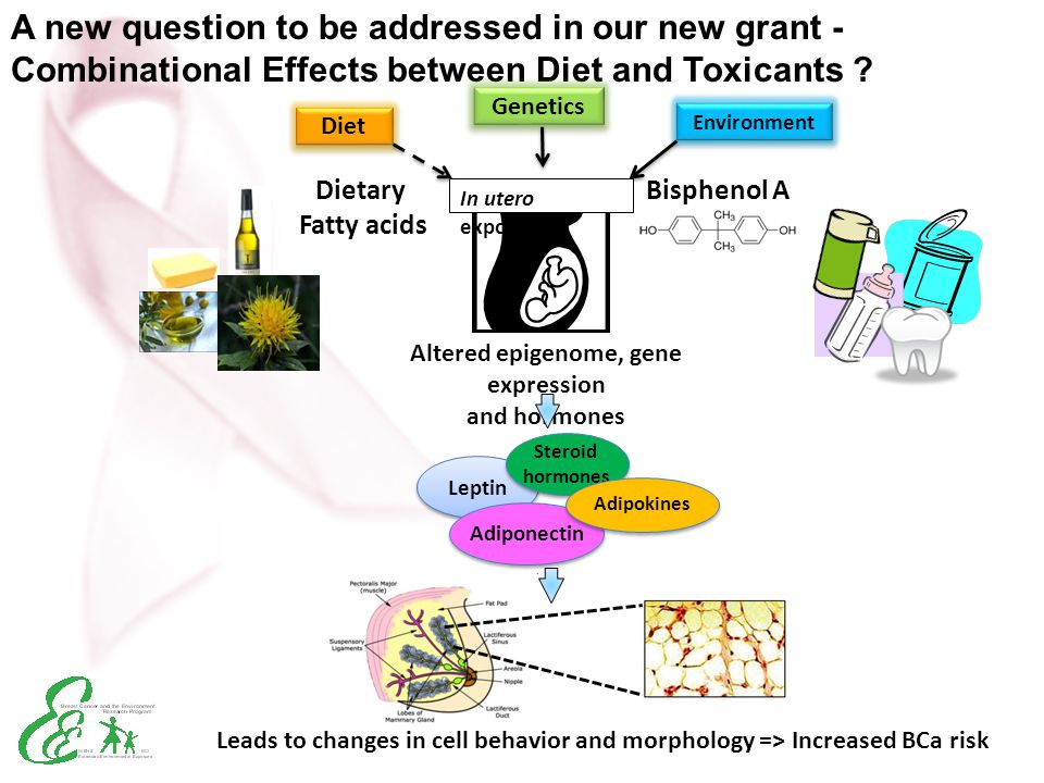 Altered epigenome, gene expression