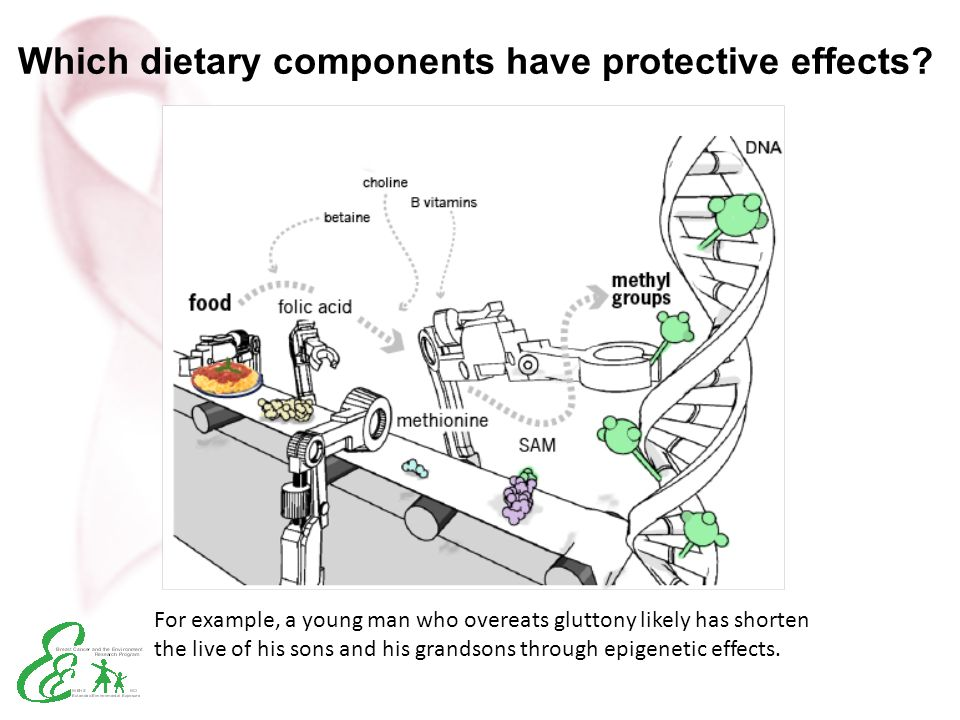 Which dietary components have protective effects