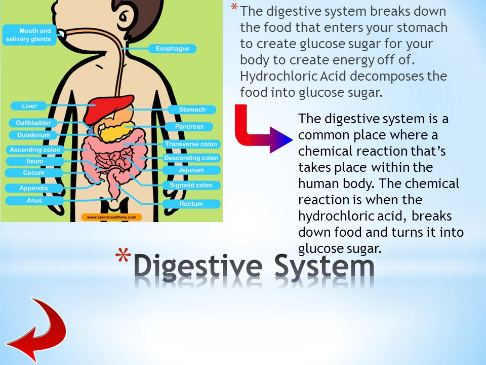 The digestive system breaks down the food that enters your stomach to create glucose sugar for your body to create energy off of. Hydrochloric Acid decomposes the food into glucose sugar.