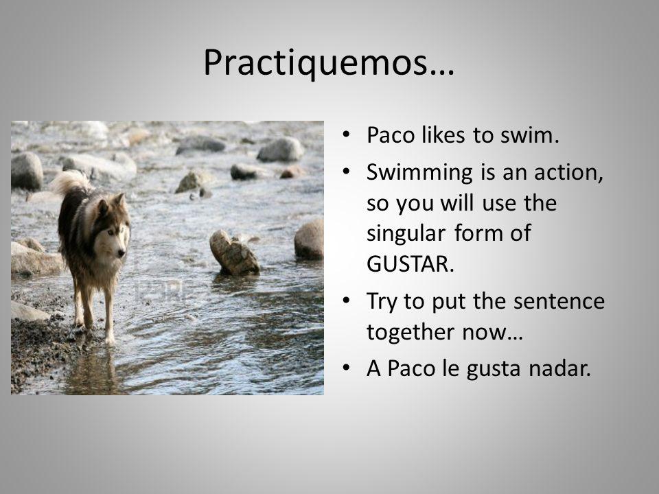 Practiquemos… Paco likes to swim.
