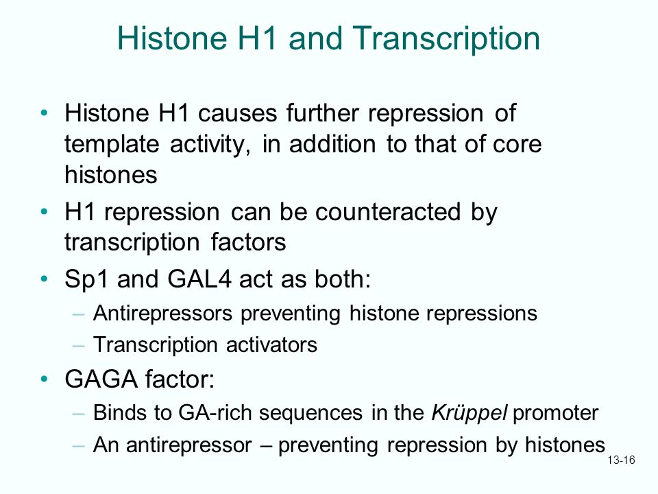 histones essay In eukaryotes, dna is organized into chromatin, a dynamic structure that enables dna to be accessed for processes such as transcription, replication and repair to form, maintain or alter this organization according to cellular needs, histones, the main protein component of chromatin, are deposited, replaced, exchanged and post-translationally.