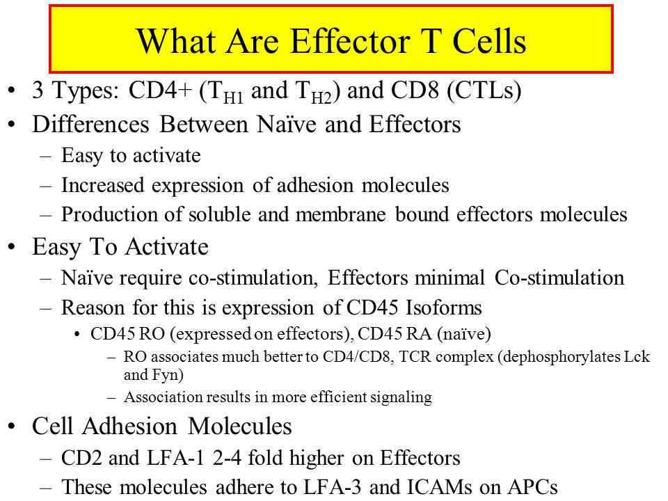 What Are Effector T Cells