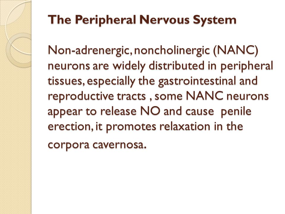 The Peripheral Nervous System Non-adrenergic, noncholinergic (NANC) neurons are widely distributed in peripheral tissues, especially the gastrointestinal and reproductive tracts , some NANC neurons appear to release NO and cause penile erection, it promotes relaxation in the corpora cavernosa.