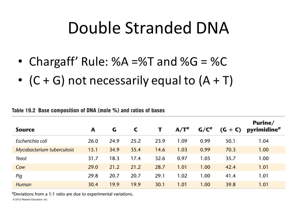 Double Stranded DNA Chargaff' Rule: %A =%T and %G = %C