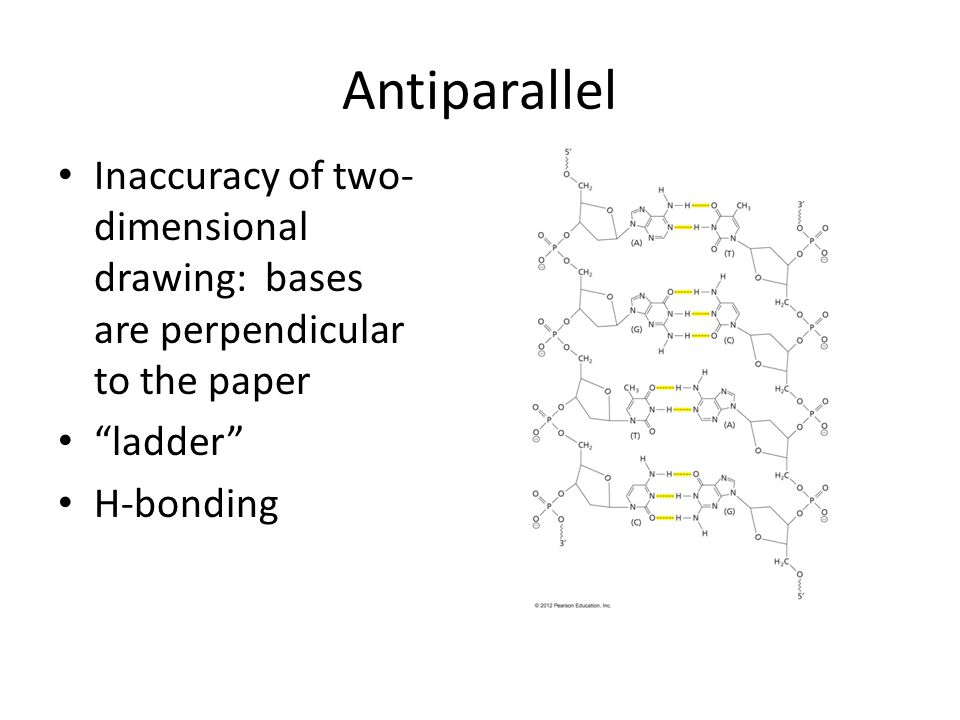 Antiparallel Inaccuracy of two-dimensional drawing: bases are perpendicular to the paper. ladder