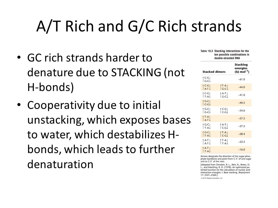 A/T Rich and G/C Rich strands