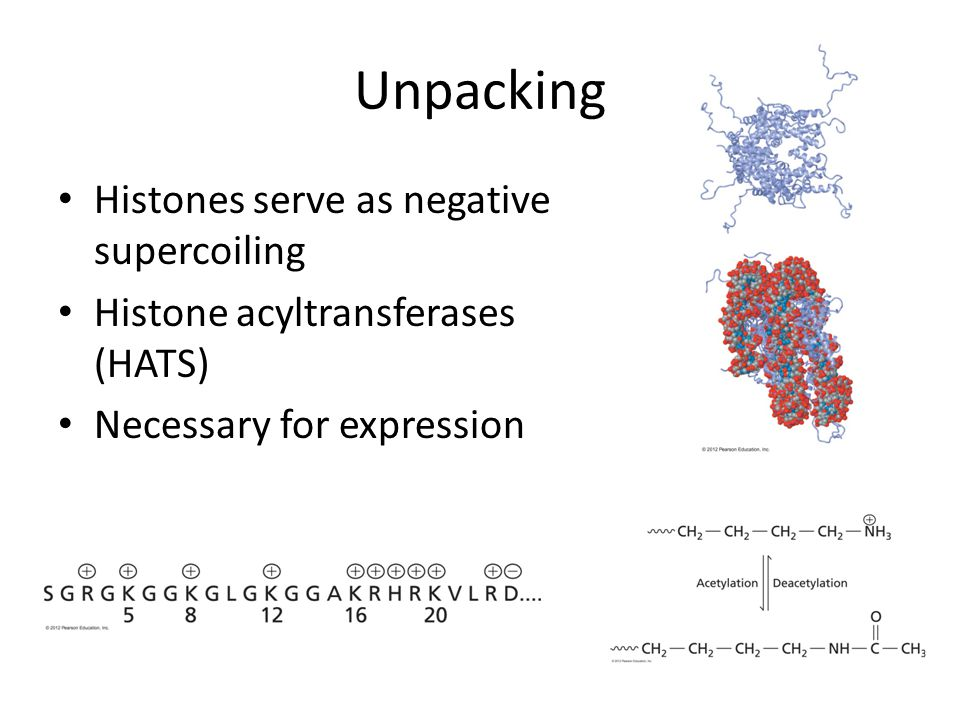 Unpacking Histones serve as negative supercoiling
