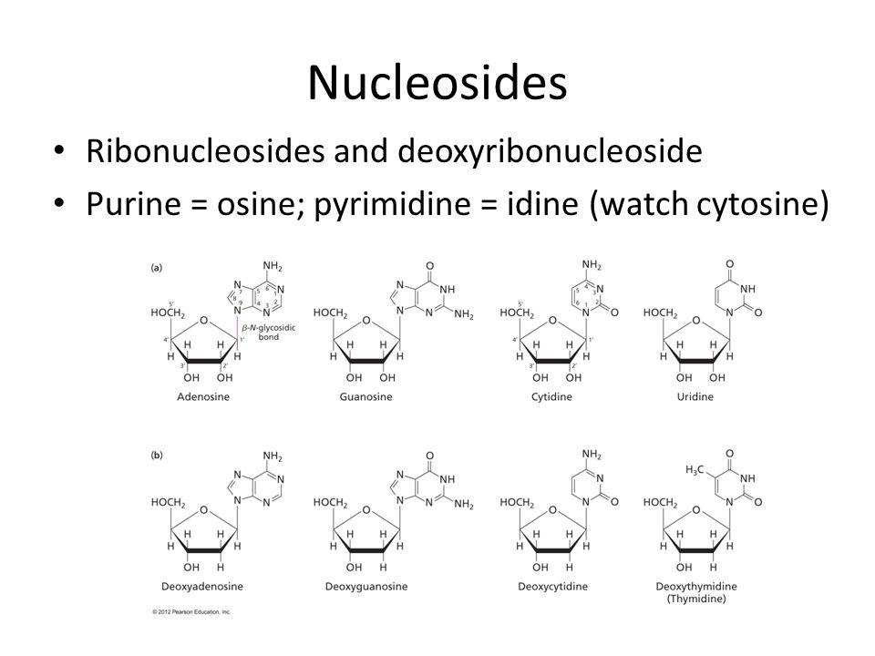 Nucleosides Ribonucleosides and deoxyribonucleoside