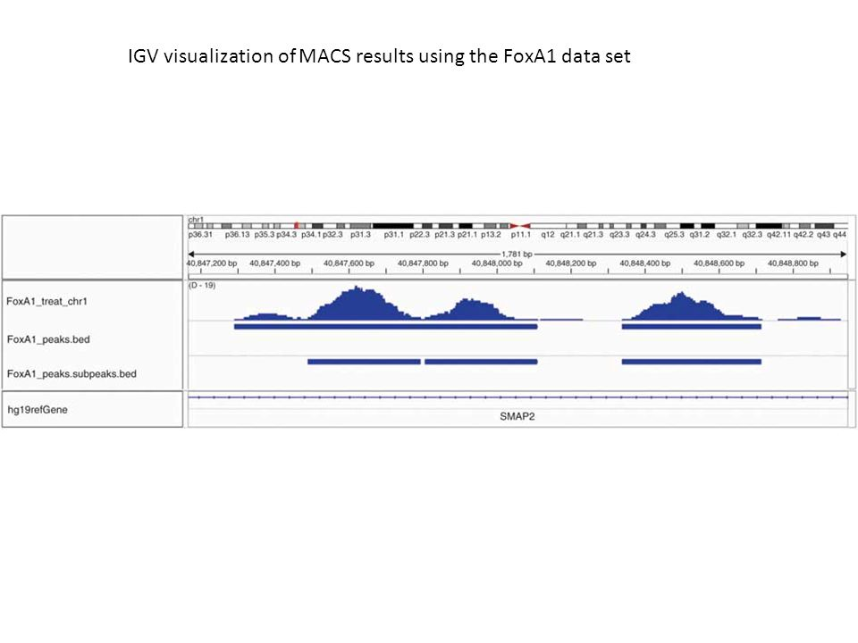 IGV visualization of MACS results using the FoxA1 data set