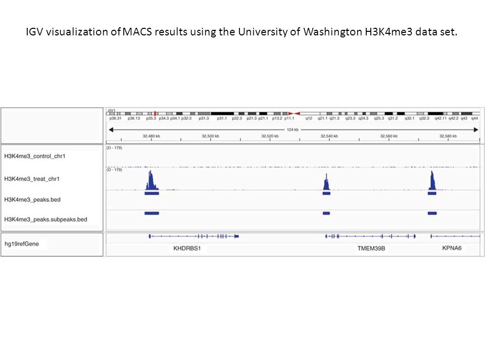 IGV visualization of MACS results using the University of Washington H3K4me3 data set.