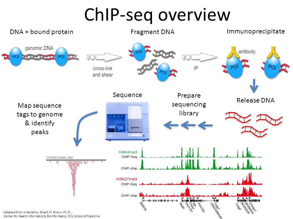 ChIP-seq overview DNA + bound protein Fragment DNA Immunoprecipitate