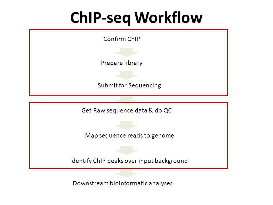ChIP-seq Workflow Confirm ChIP Prepare library Submit for Sequencing