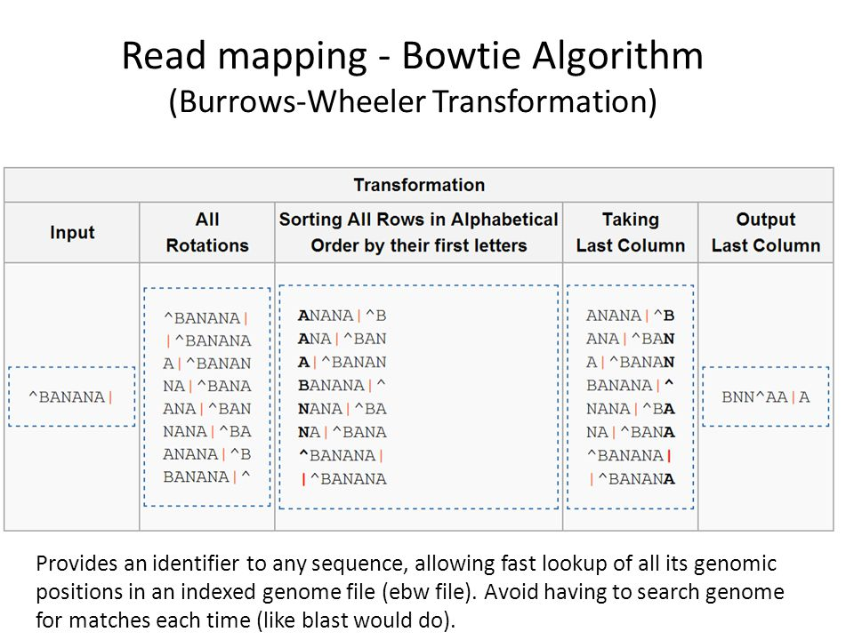 Read mapping - Bowtie Algorithm (Burrows-Wheeler Transformation)
