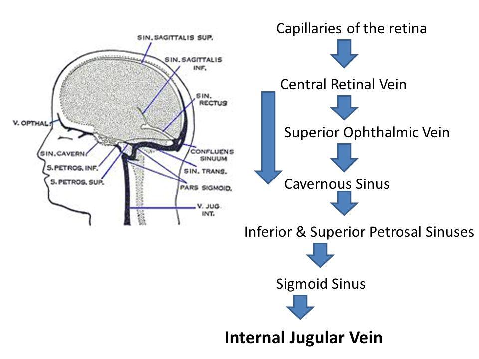 Internal Jugular Vein Capillaries of the retina Central Retinal Vein