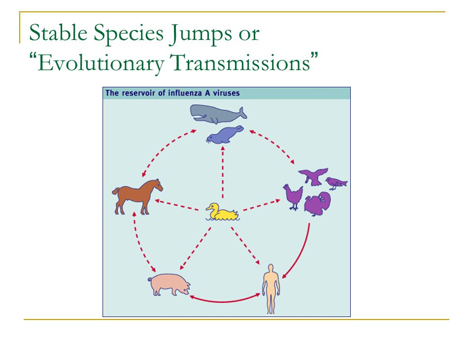 Stable Species Jumps or Evolutionary Transmissions