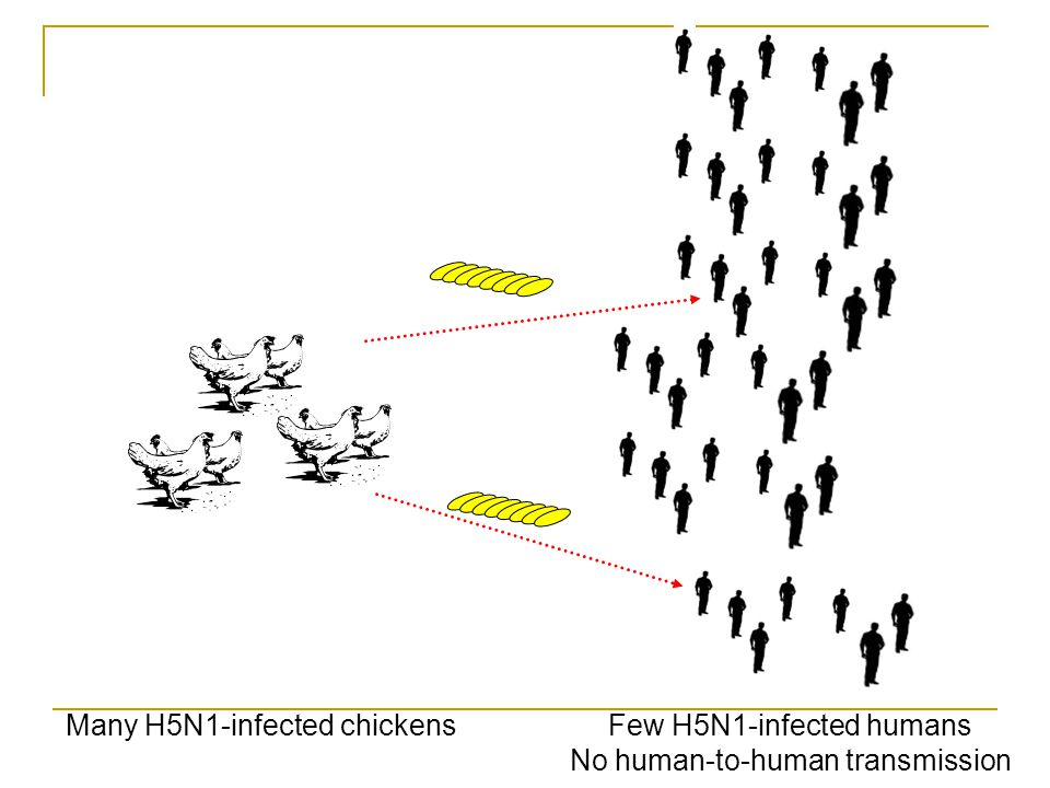 Many H5N1-infected chickens Few H5N1-infected humans