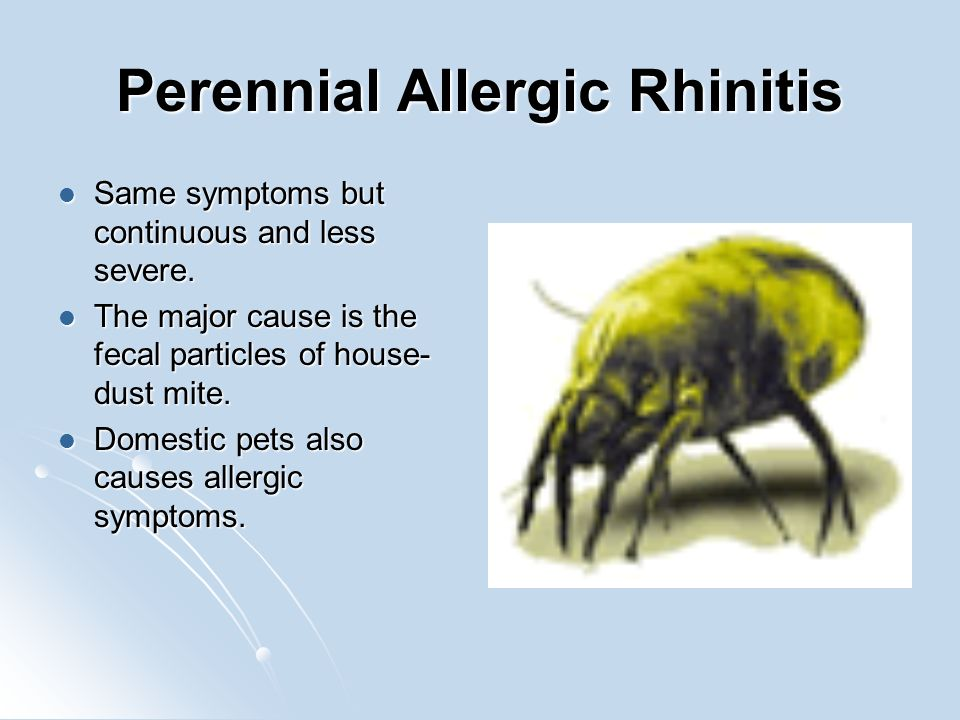 Perennial Allergic Rhinitis