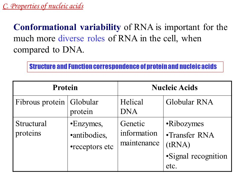 structure and roles of nucleic acids Chapter 5 the structure and function of macromolecules and nucleic acids in a gene specifies the order of amino acids—the primary structure—of a.