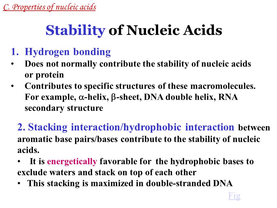 Stability of Nucleic Acids