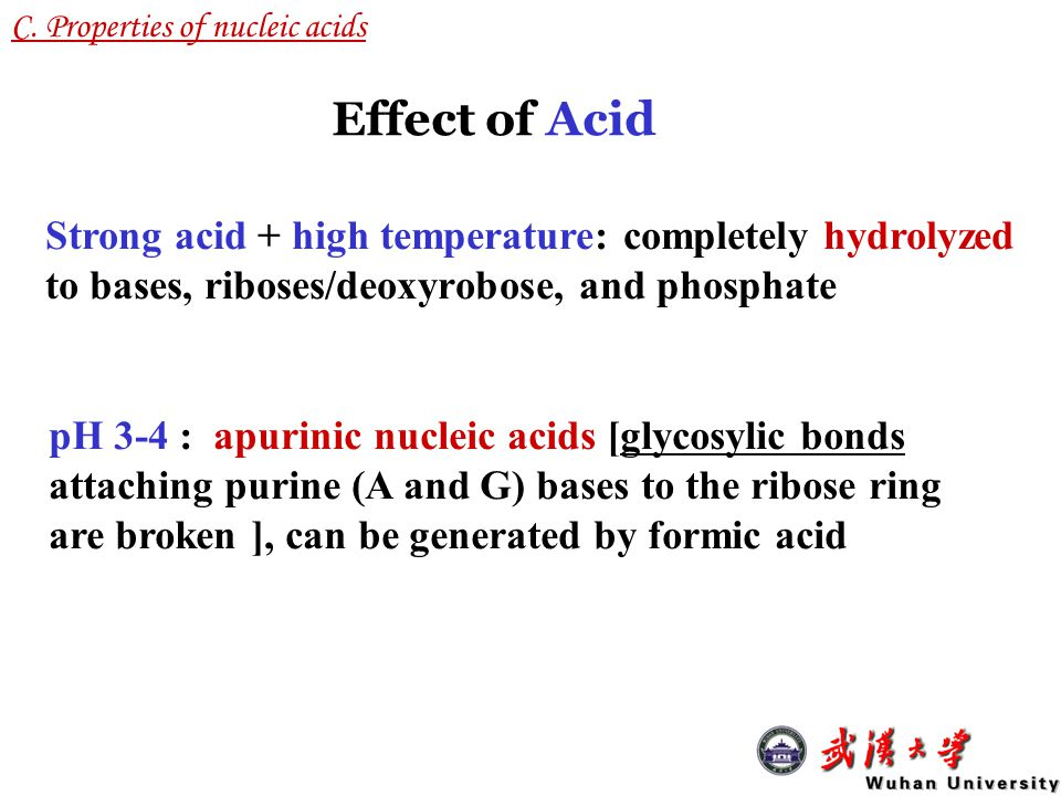 C. Properties of nucleic acids