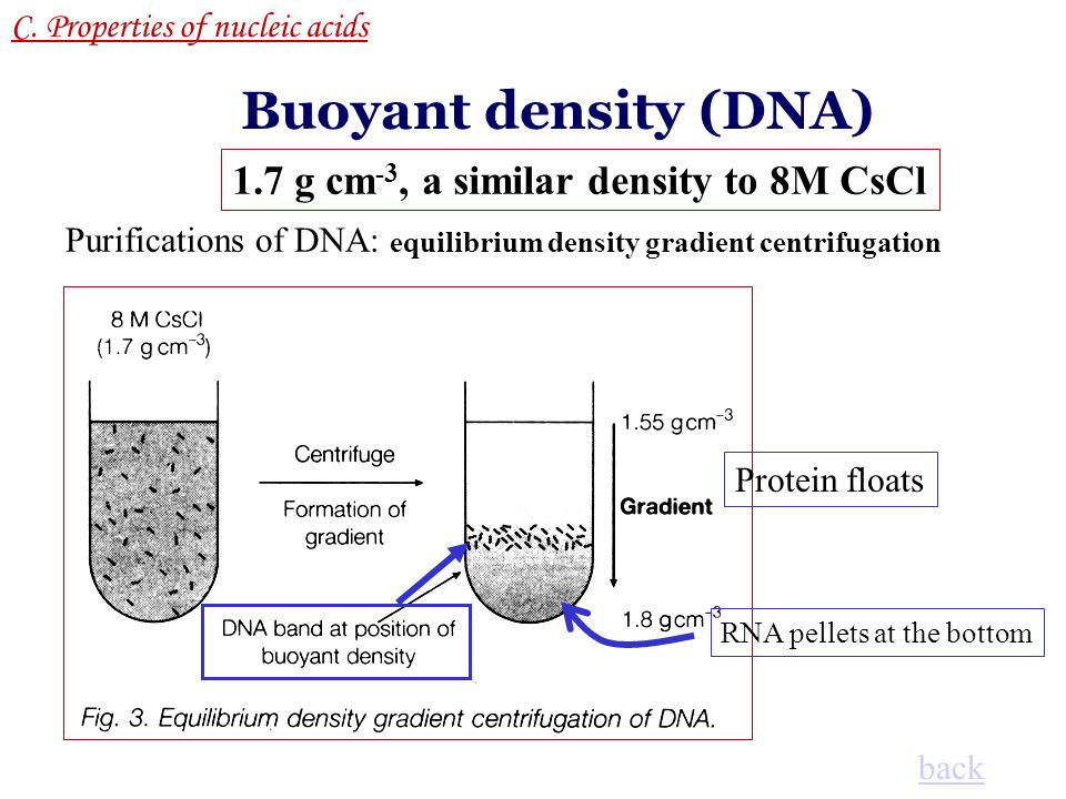 Buoyant density (DNA) 1.7 g cm-3, a similar density to 8M CsCl