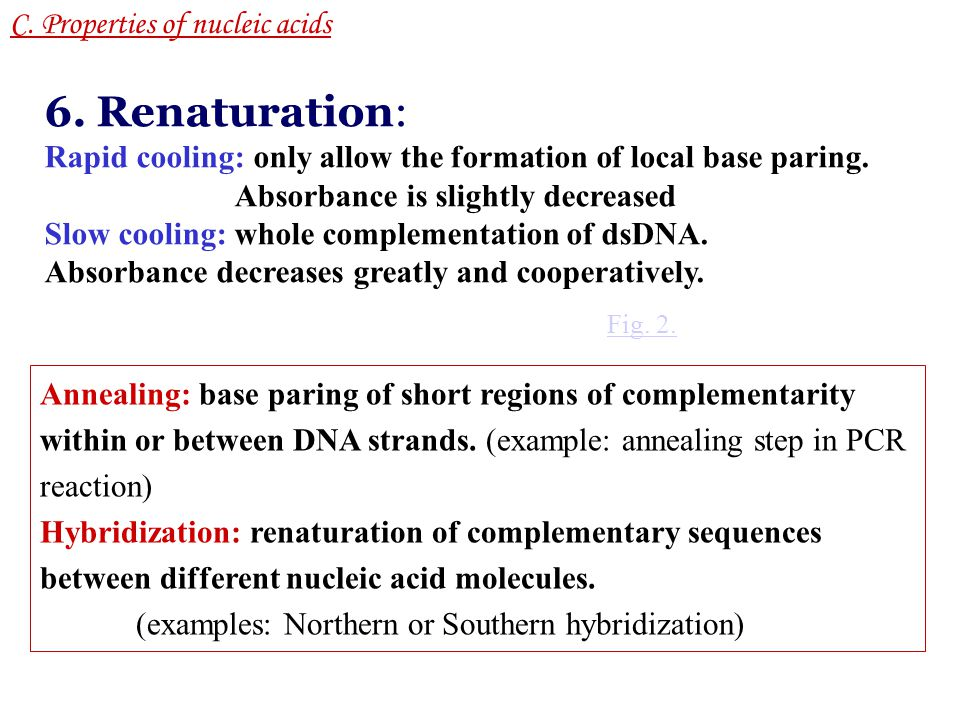 6. Renaturation: C. Properties of nucleic acids