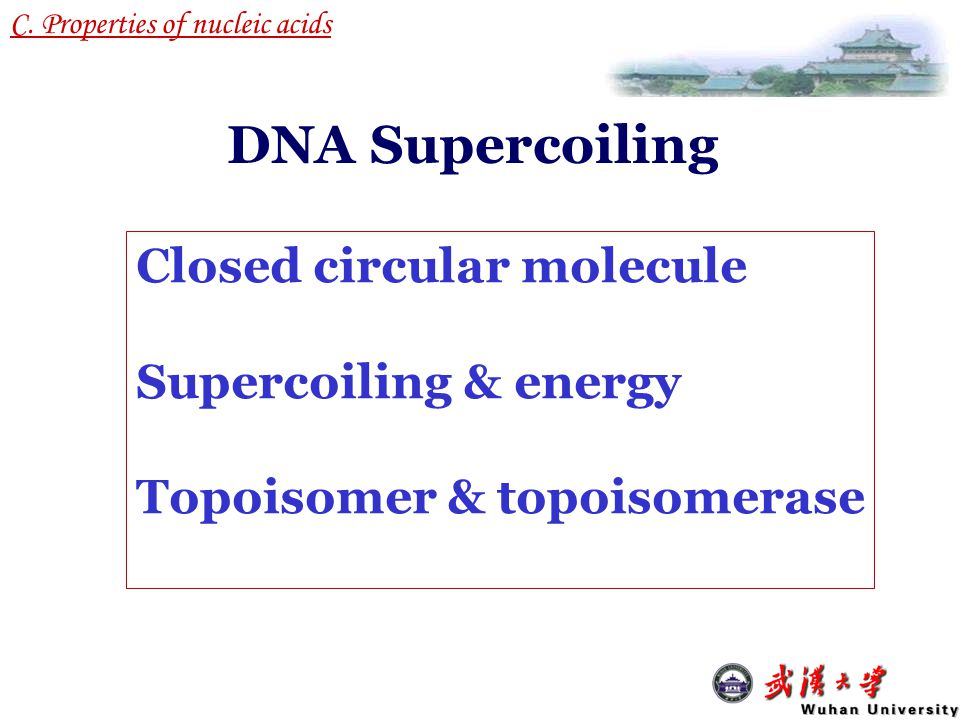 DNA Supercoiling Closed circular molecule Supercoiling & energy