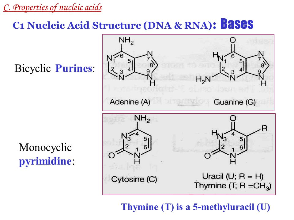 Bicyclic Purines: Monocyclic pyrimidine: