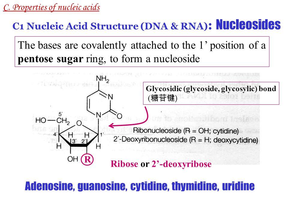 Adenosine, guanosine, cytidine, thymidine, uridine