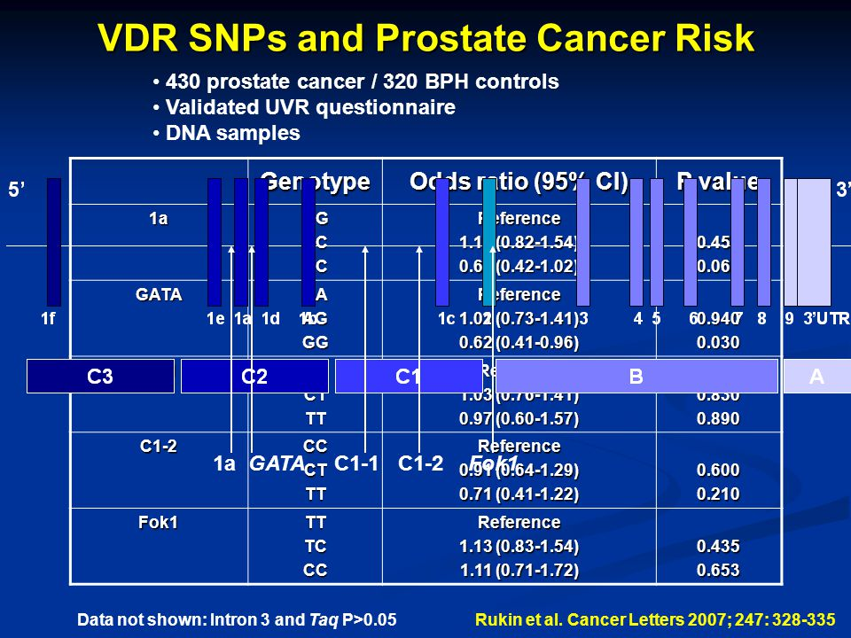 VDR SNPs and Prostate Cancer Risk