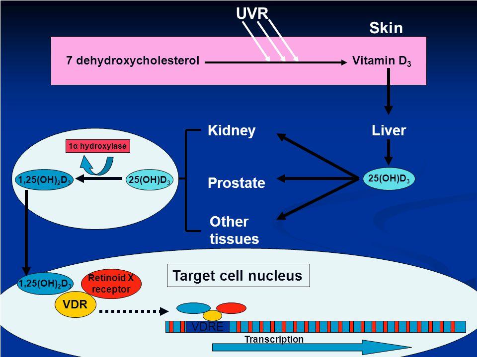7 dehydroxycholesterol Vitamin D3